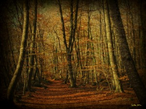 Serie Mi bosque de Cristina Ortiz