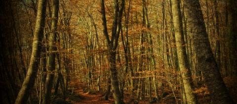 Mi bosque: fotografia pictorica