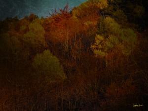 De la serie Otro bosque de Cristina Ortiz