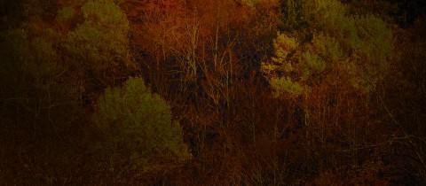 Fotografia pictorica: Otro bosque